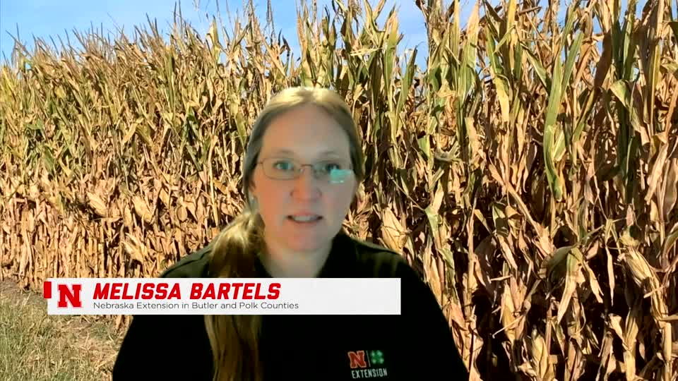 Lancaster County 4-H Virtual Ag Literacy Festival: Corn & Soybeans