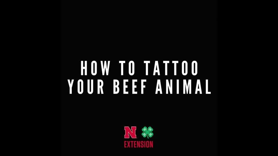 Tattooing Beef Projects