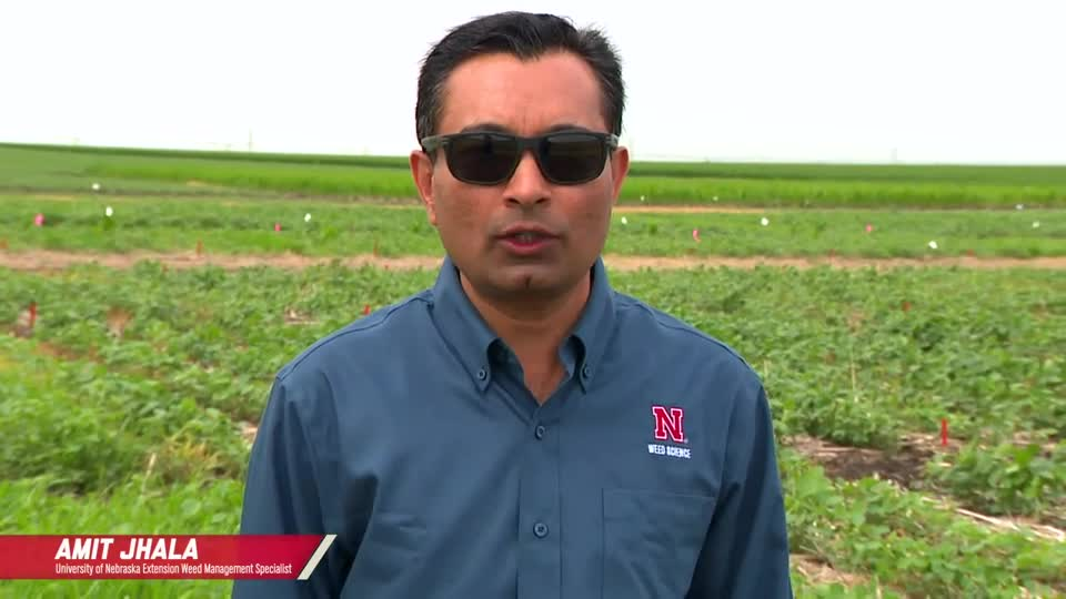 Soybean Herbicide Program Comparison