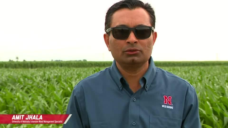 Corn Herbicide Program Comparison