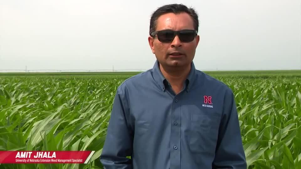Atrazine Alternatives For Pre Weed Control in Corn