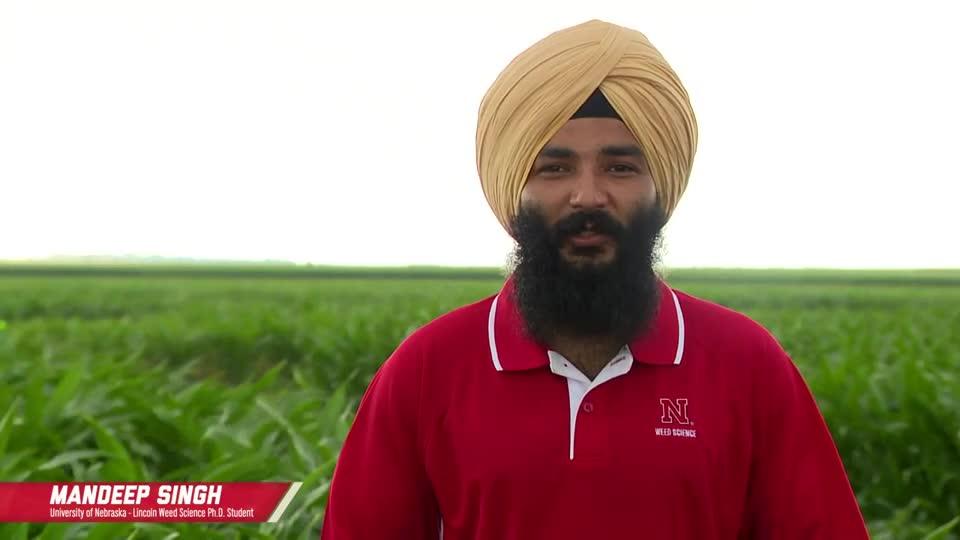 Pre Control of Xtend Flex Soybean Volunteers In Corn