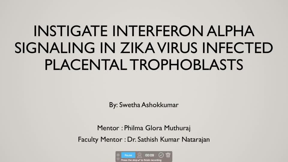 Instigate Interferon Alpha Signaling in Zika Virus Infected Placental Cells
