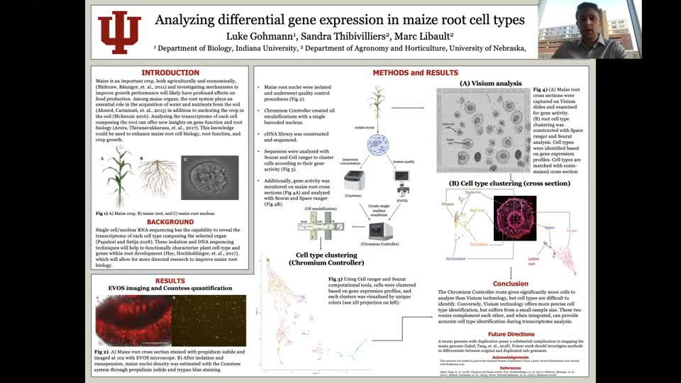 Analyzing differential gene expression of maize root cell types