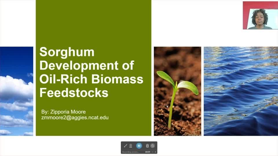 Sorghum Development of Oil-Rich Biomass Feedstocks