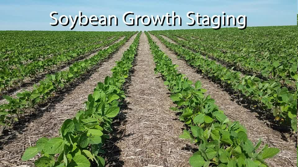 Soybean Growth Staging