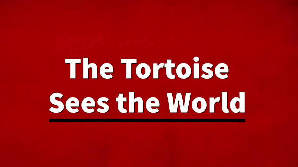 The Tortoise Sees the World