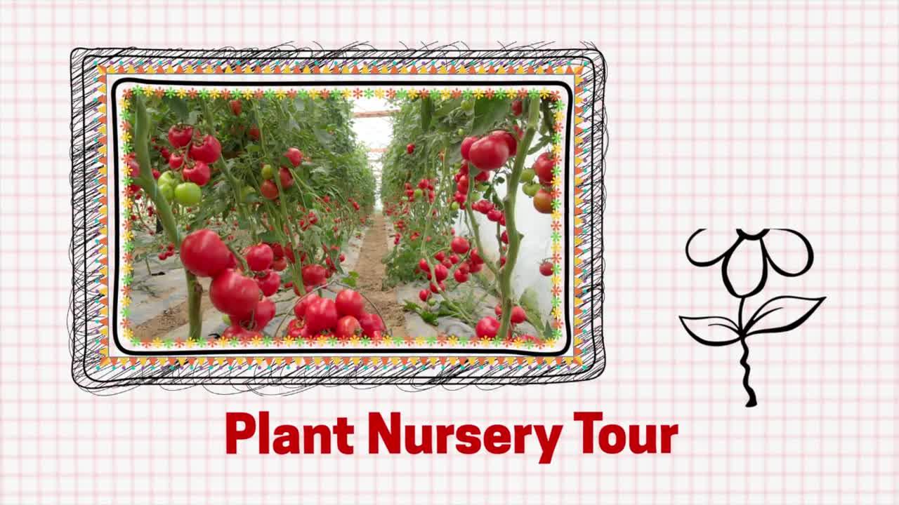 Nursery - Virtual Field Trip