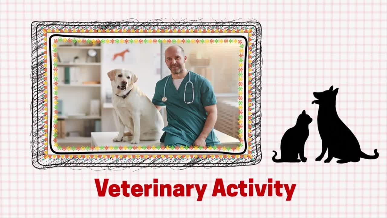Veterinarian Hands-on Activity