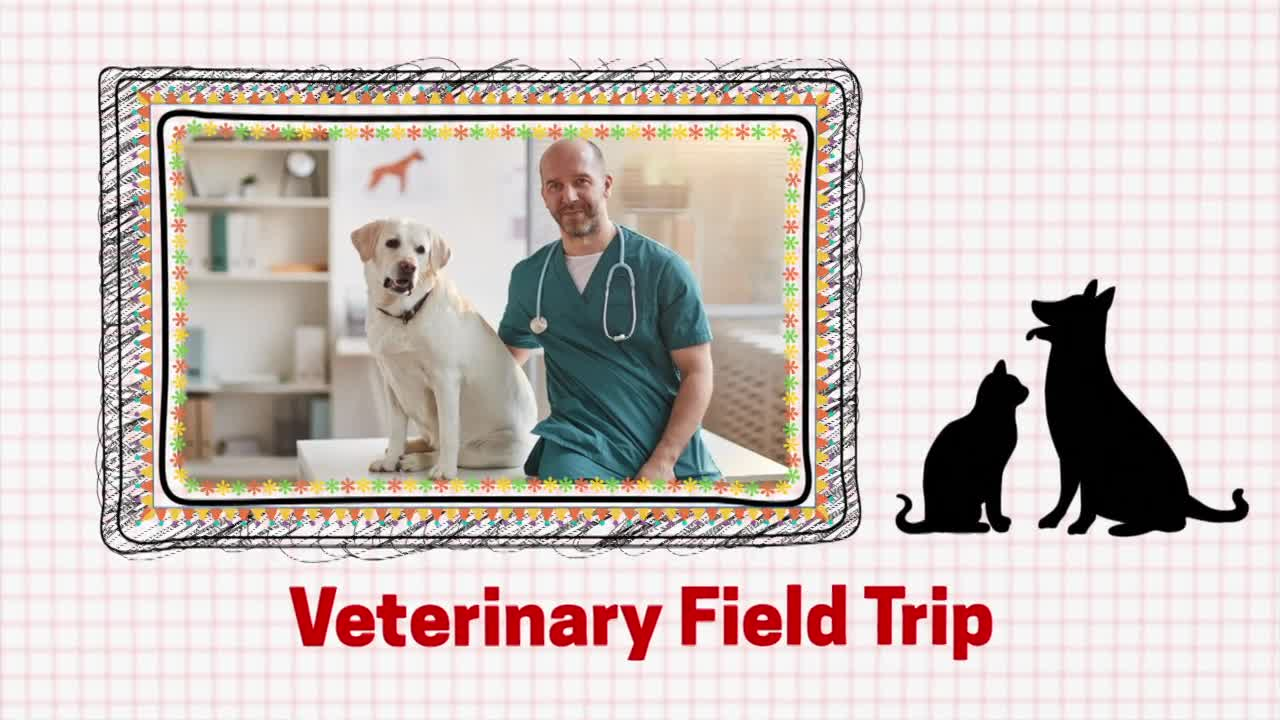 Veterinarian Virtual Tour