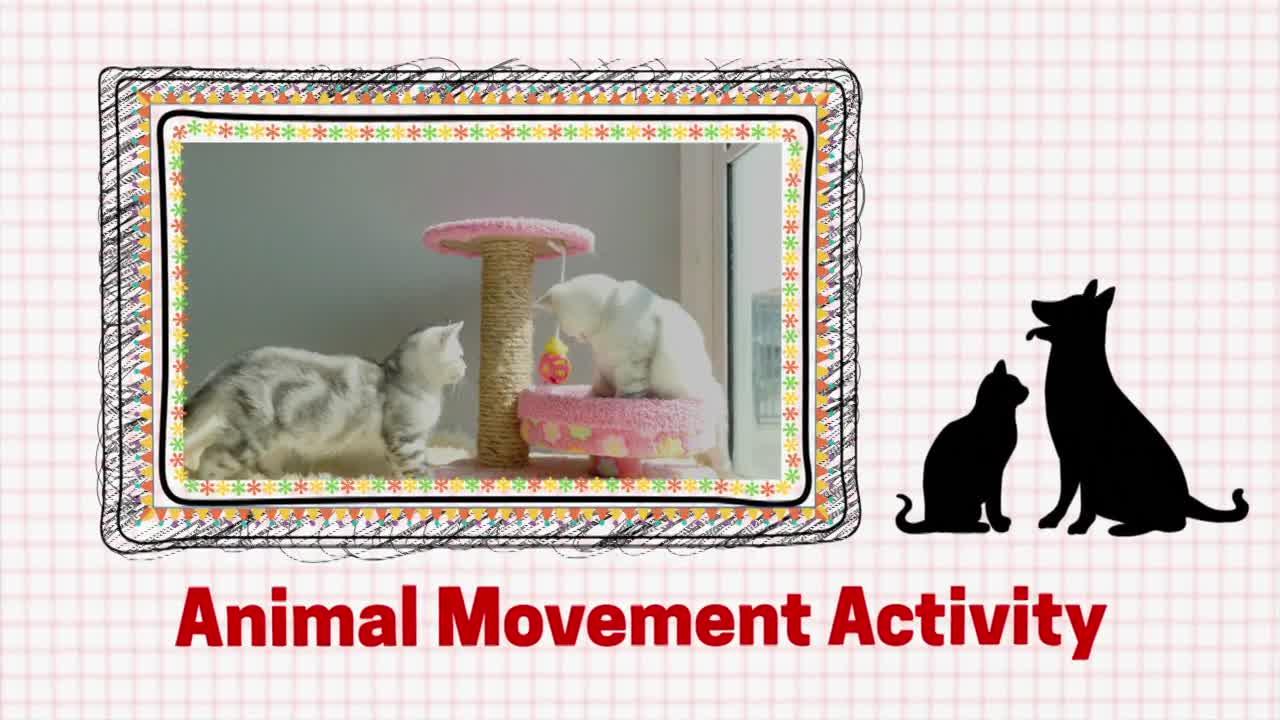 Veterinarian Movement Activity