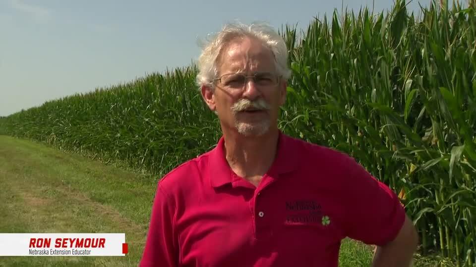 4 - 2021 South Central Ag Lab Field Day - European Corn Borer