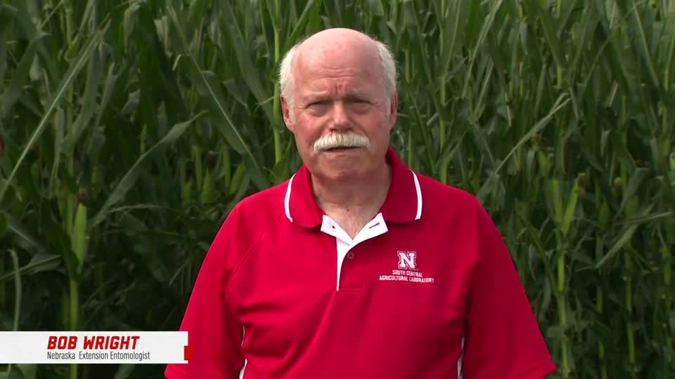 5 - 2021 South Central Ag Lab Field Day - Corn Rootworm Research and Management