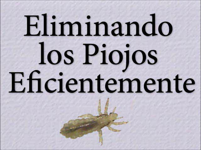 Removing Head Lice Safely (Spanish -- Eliminando los Piojos Eficientemente)