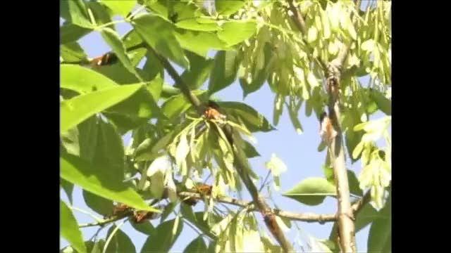 17 Year Cicada Cluster