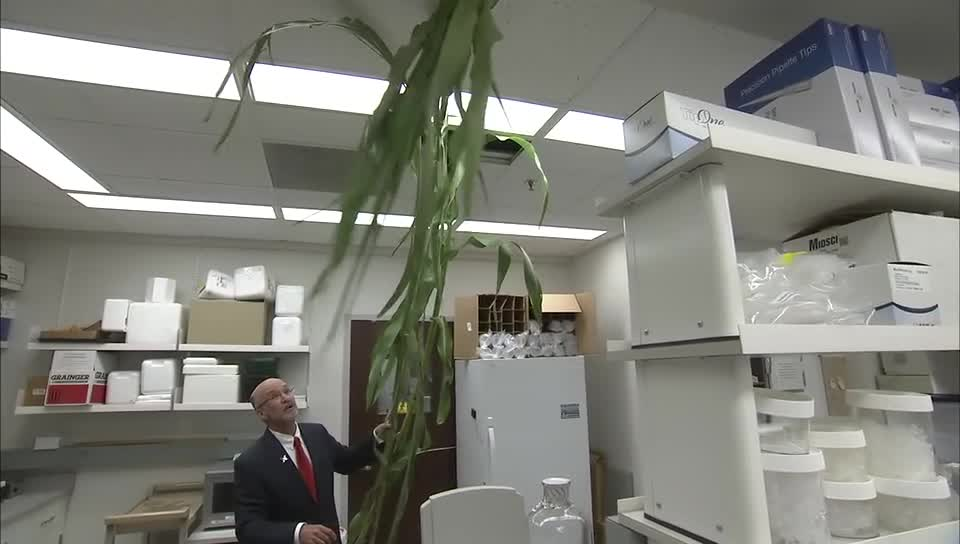UNL Leads $13.5 Million Research on Sorghum for Biofuel