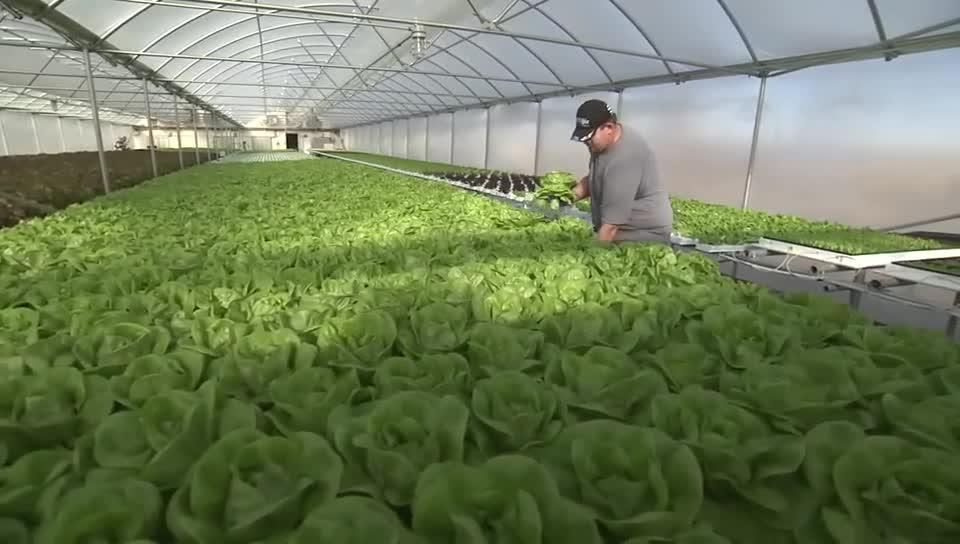 Buy Fresh Buy Local: Oak Ridge Farms