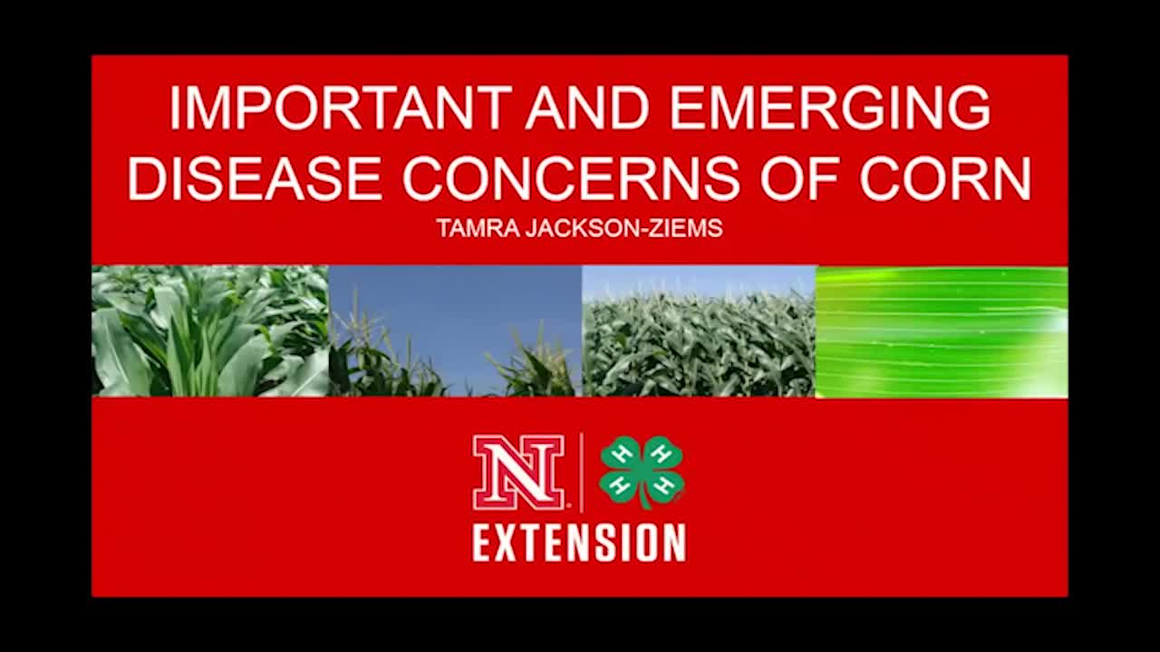 Important and emerging disease concerns of corn