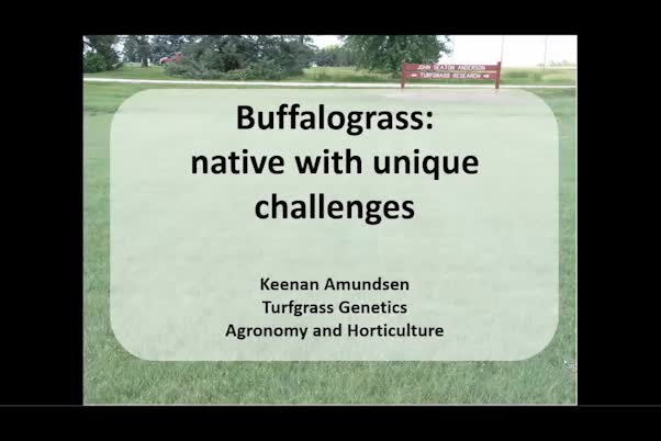 Buffalograss—native with unique challenges