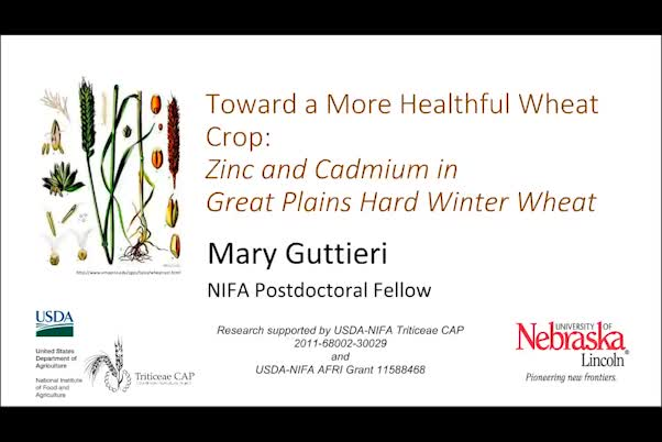 Toward a more healthful wheat crop: Zinc and cadmium in Great Plains hard winter wheat