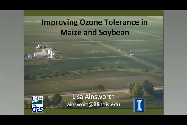 Improving ozone tolerance in maize and soybean