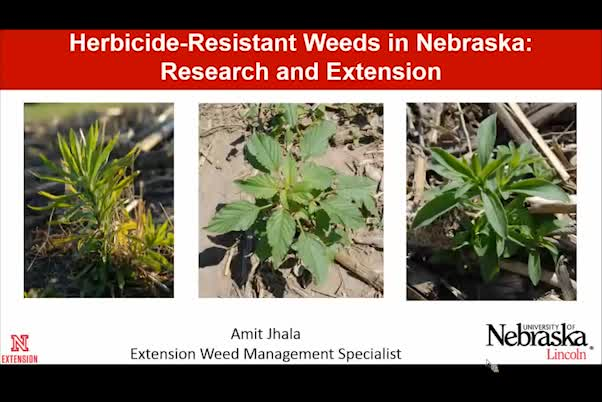 Herbicide-resistant weeds in Nebraska—research and extension