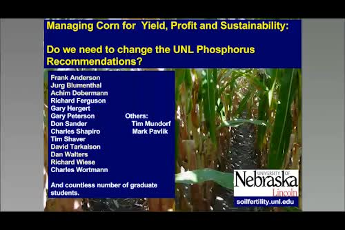 Revisiting phosphorus recommendations for corn
