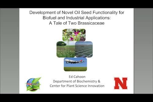 Development of novel oil seed functionality for biofuel and industrial application