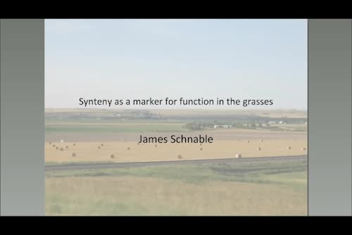 Synteny as a marker for function across the grasses
