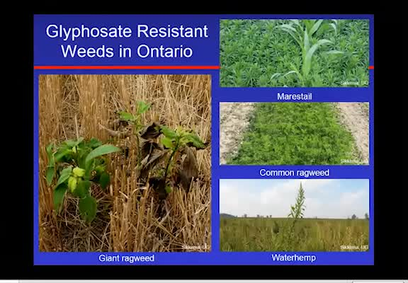 Glyphosate-Resistant Weeds in Ontario, Canada - Distribution and Control