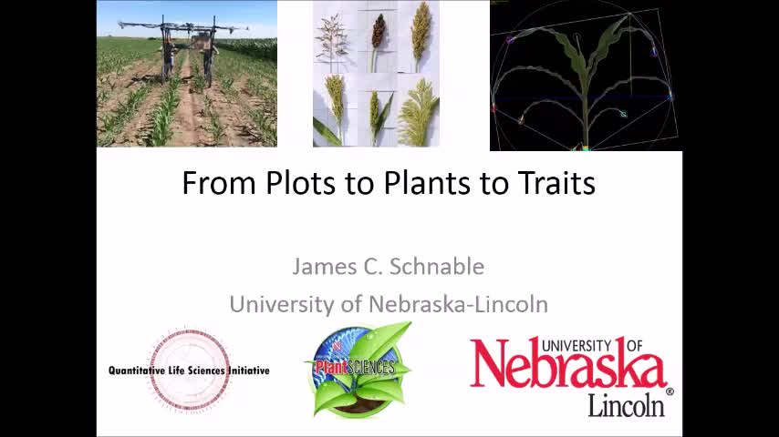 """High Throughput Phenotyping of nand Sorghum: From Plots to Plants to Traits"""