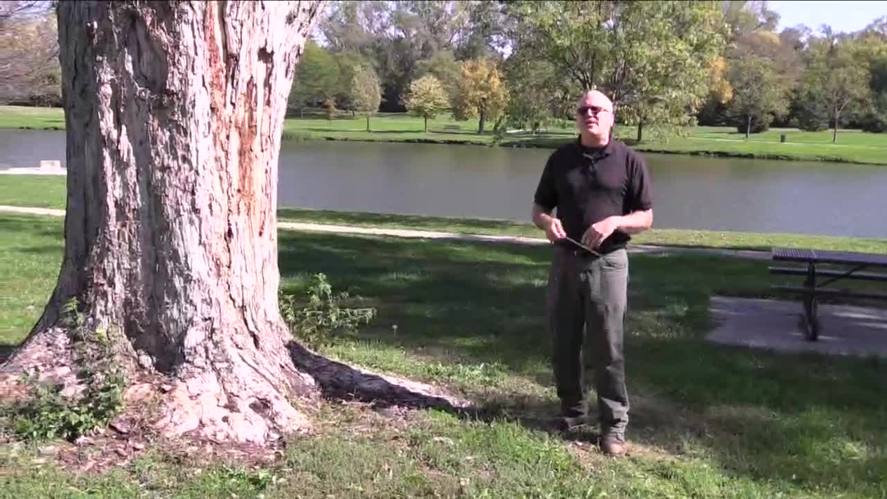 Tree Risk Assessments - Outdoor session (pt. 5)
