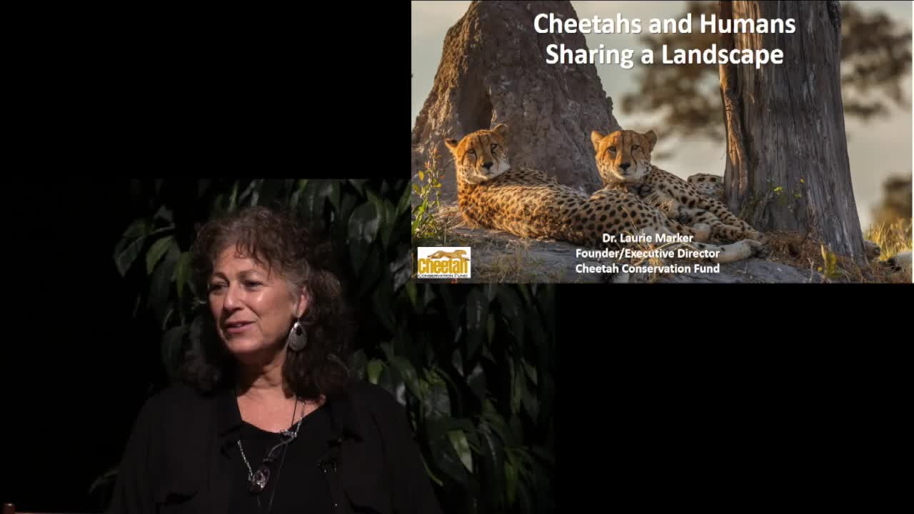 Dr. Laurie Marker - Cheetahs and Humans, Sharing a Landscape