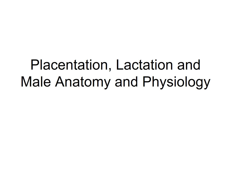 Wk 13: Placentation Lactation Male Anatomy & Phys