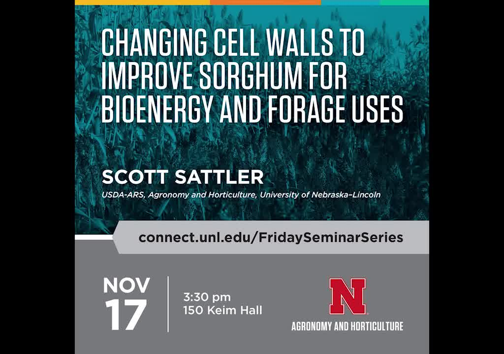 Changing cell walls to improve sorghum for bioenergy and forage uses