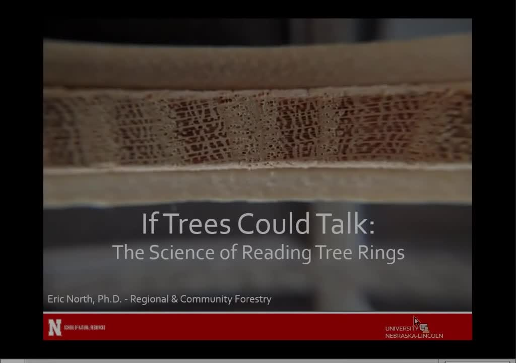 If trees could talk: The science of reading tree rings