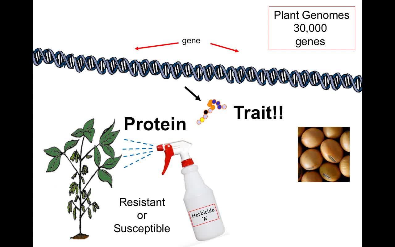 FCGMOs Mutations Basics