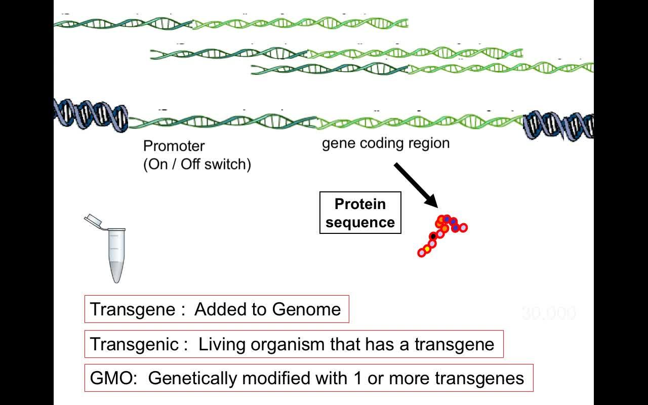 FCGMOs Transgenes Basics