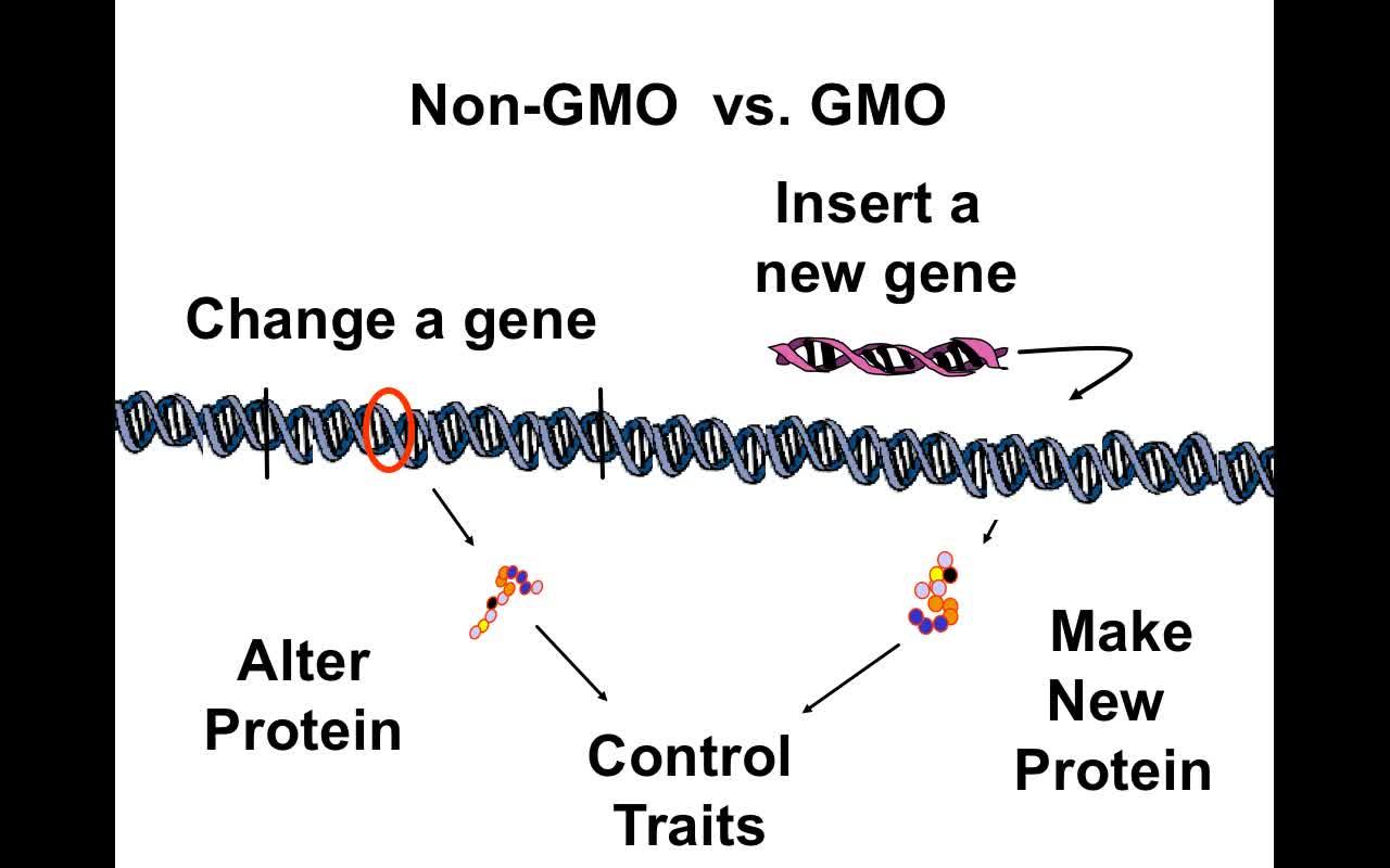 FCGMOs GMOs vs non-GMOs