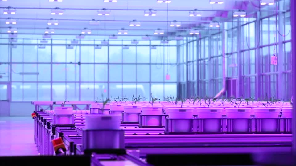 Center for Plant Science Innovation