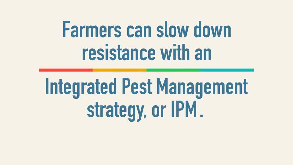 How to Manage Insect Resistance in Bt Crops