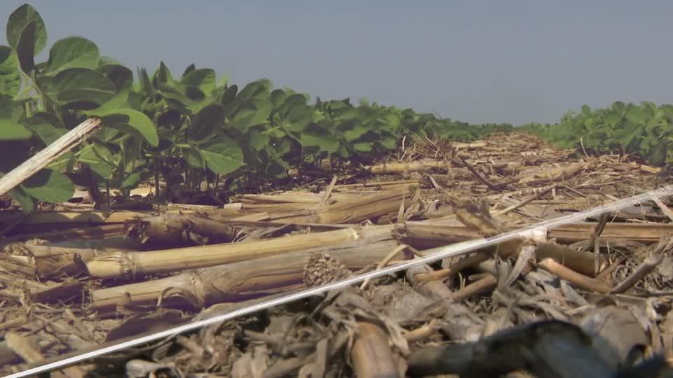 Agricultural Pest Control - Plant Recertification