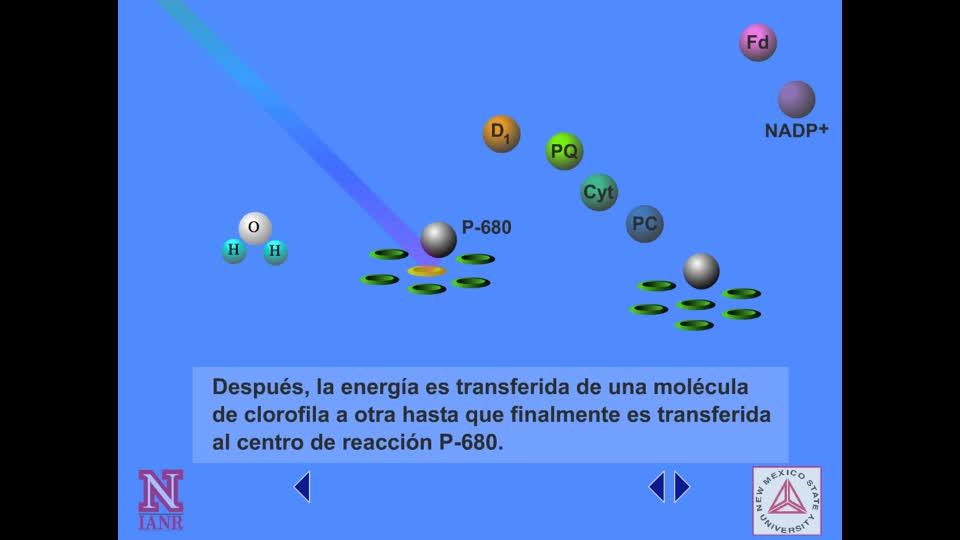 Descripción de la Transferencia de Electrones entre Fotosistemas