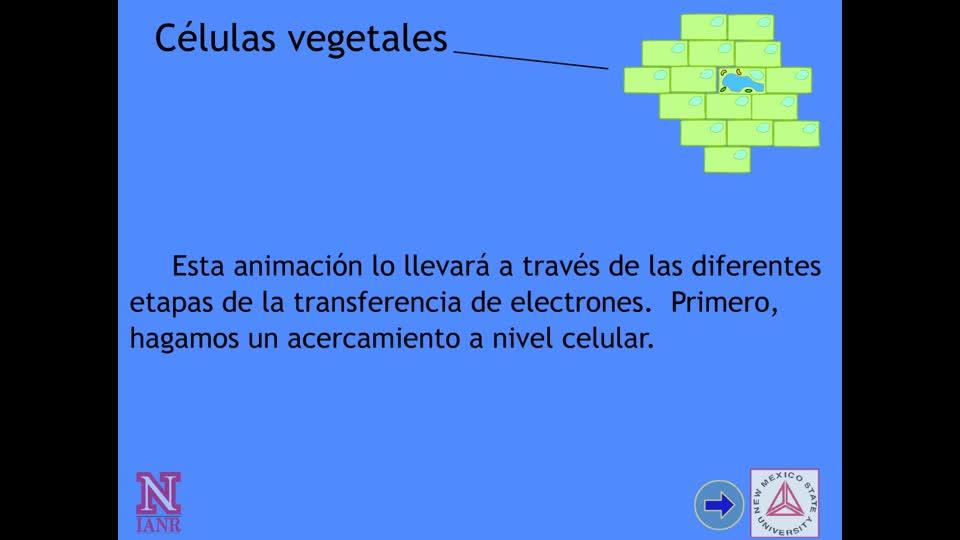 Transferéncia de Electrones Dentro de la Célula