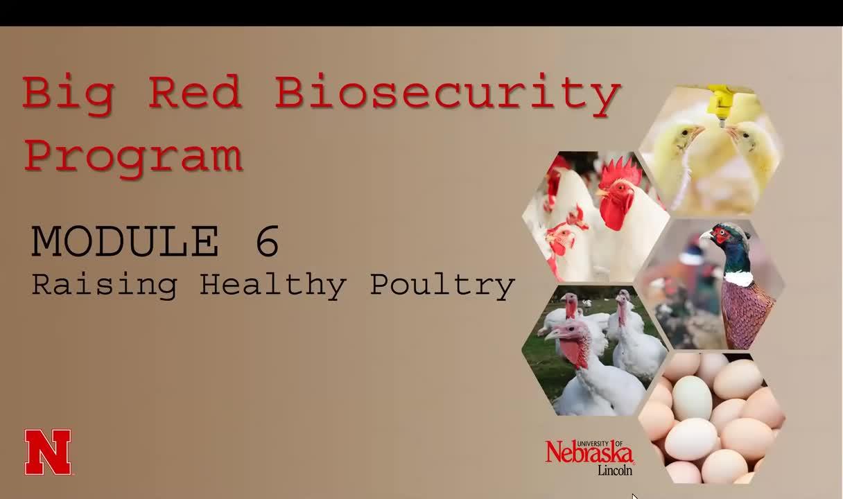 MODULE 6: Raising healthy poultry
